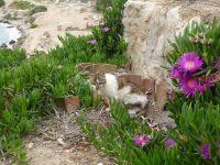 """Unser Foto (© Griechenland Zeitung / Jan Hübel) entstand oberhalb des Hera-Heiligtums von Perachora (""""Heraion""""), ca. 10 Kilometer von Loutraki (bei Korinth) entfernt. Ein mythisch-mystischer Ort, den auch unsere Katze sichtlich genießt."""
