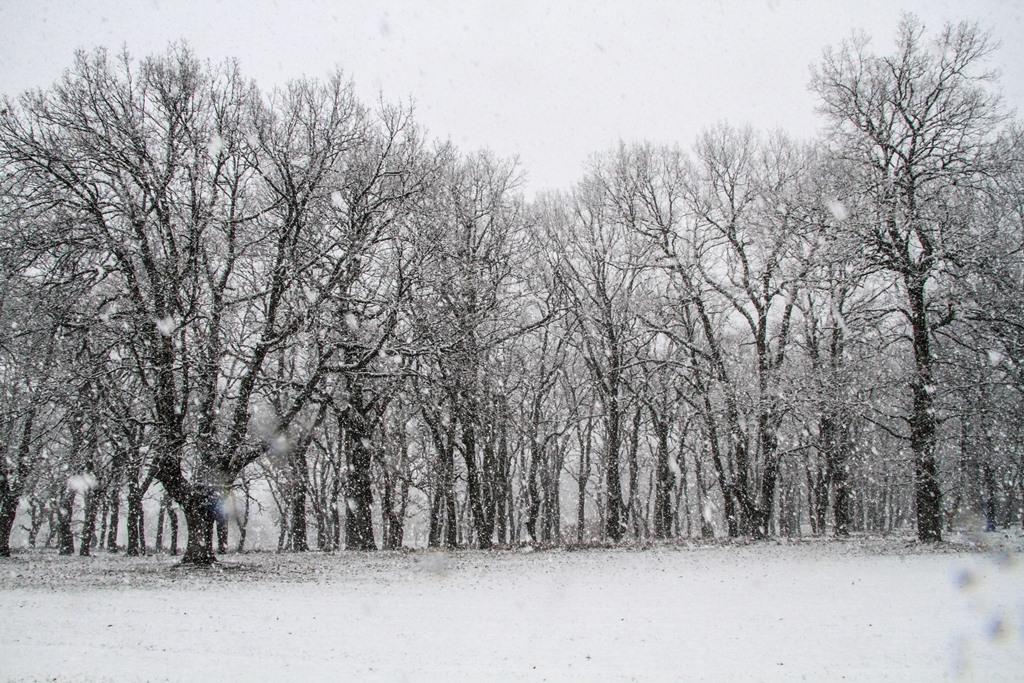 190107 Schnee 4 SMALL