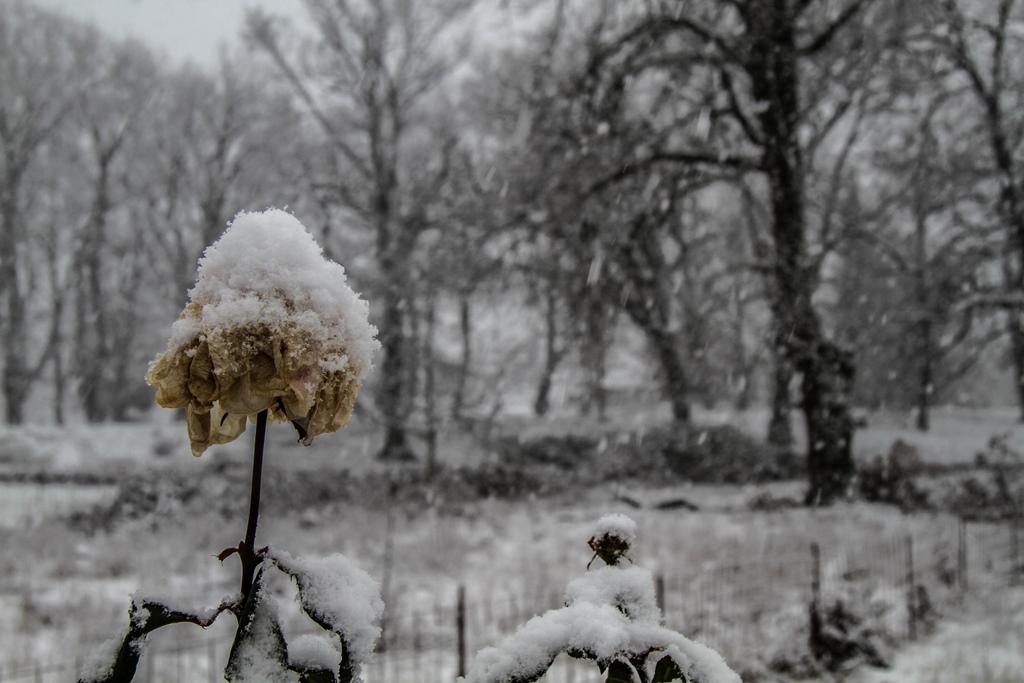 190107 Schnee 5 SMALL