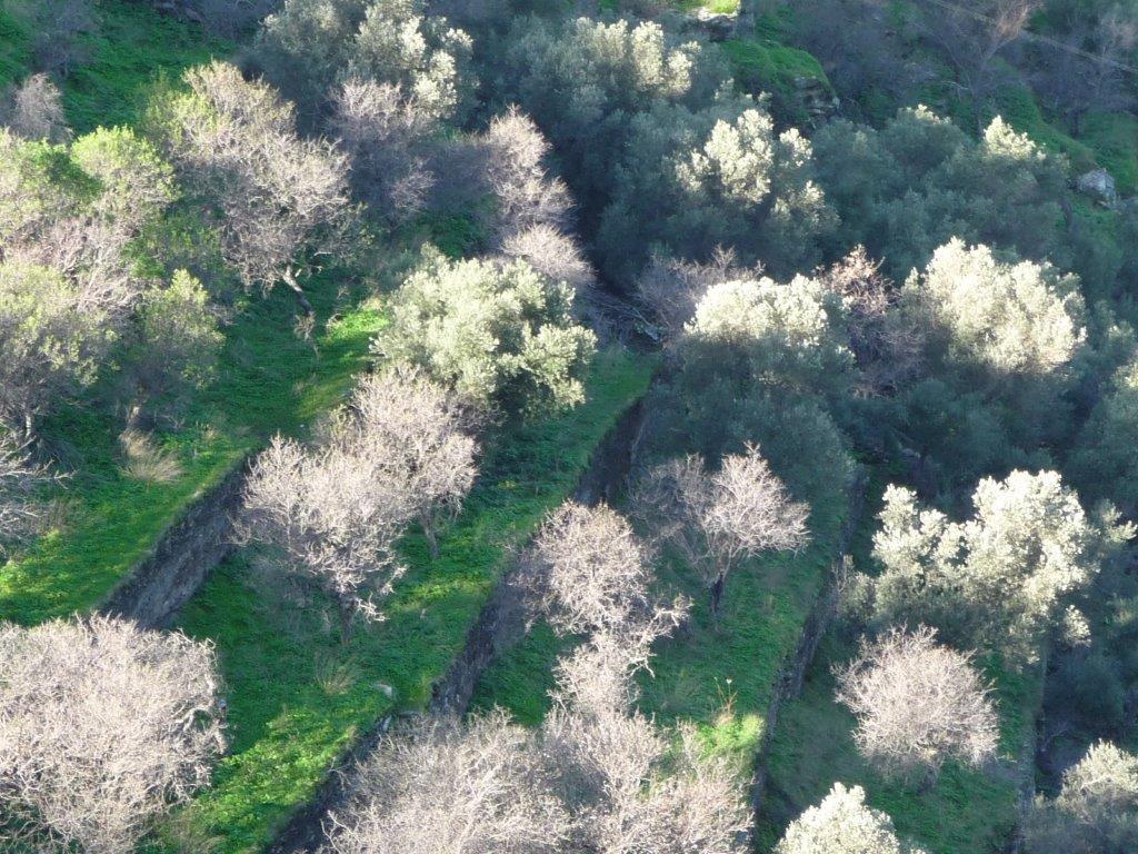 Schon im Februar ist die Natur mit Farben verschwenderischjpg