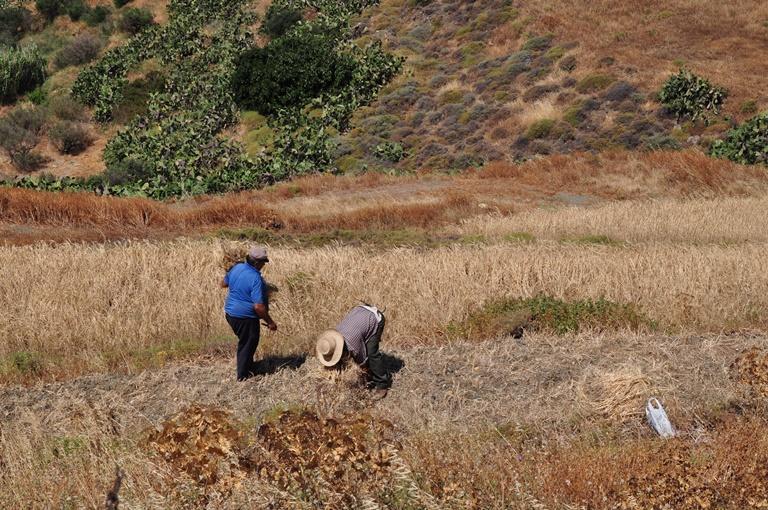 Auch etwas Landwirtschaft wird noch betrieben