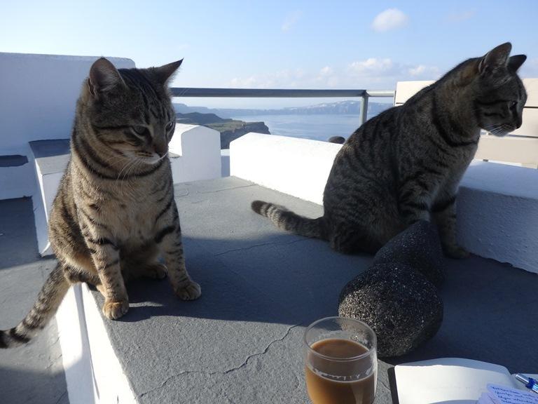 Katzenpaar an der Caldera