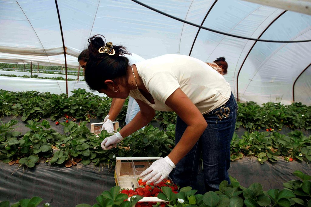 190724 Erdbeeren 2 SMALL