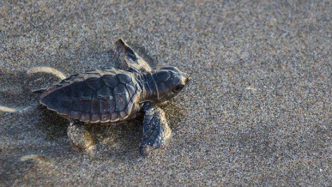 Stellung schildkröten Afslag Den