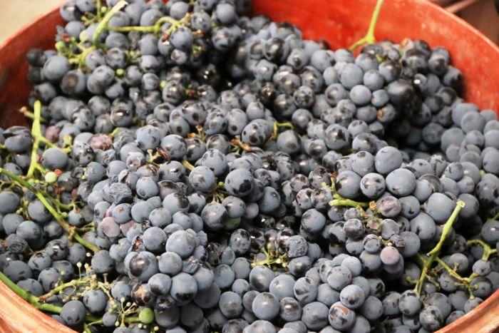 Wein - Ein Geschenk der Götter: Die Weinstraßen Nordgriechenlands